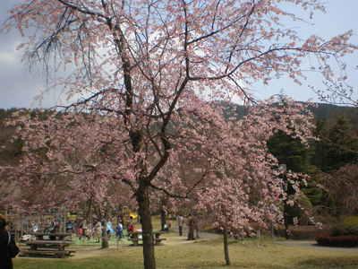 植物園 (8)