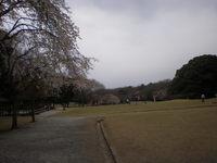 森林公園 (11)