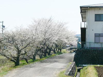 siokawa